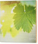Grapevine Leaves Wood Print