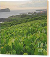 Grapevines And Islet Wood Print by Gaspar Avila