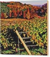 Grapevines In Vineyard, Traverse City Wood Print