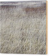 Grass Abstract Wood Print