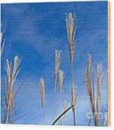 Grass Against A Blue Sky Wood Print