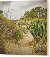 Grass And Sand Of Elafonisi Wood Print