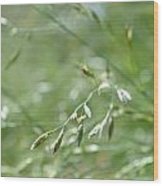 Grass Blade Wood Print