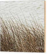 Grass Down By The Shore Of Virginia Beach Wood Print