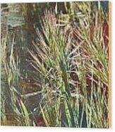 Grass In Sunlight Wood Print