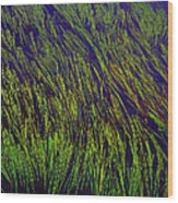 Grass In The Lake Wood Print