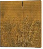Grass In The Light Of The Rising Sun Wood Print
