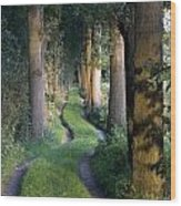 Grass Lane Wood Print