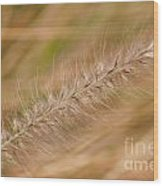 Grass Seed Head Wood Print