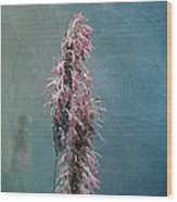 Grasses - Art By Nature Wood Print