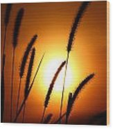 Grasses At Sunset - 1 Wood Print