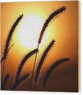 Grasses At Sunset - 2 Wood Print