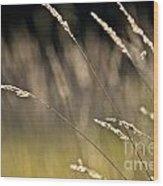 Grasses Blowing Wood Print