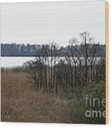 Grasses By The Lake Wood Print