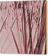 Grasses Wood Print by Colleen Cannon