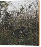 Grasses Glittering With Thousand Of Raindrops Wood Print