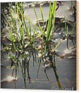 Grasses In Water Wood Print