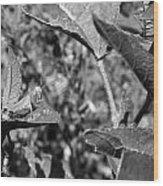 Grasshopper 2 Wood Print