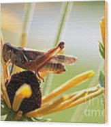 Grasshopper Antena Up Wood Print