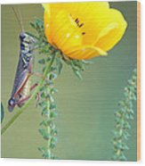 Grasshopper Be Still Wood Print