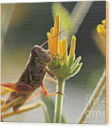 Grasshopper Delight Wood Print