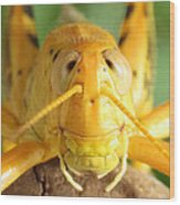 Grasshopper Grin Wood Print