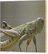 Grasshopper In Profile Wood Print by David  Ortiz
