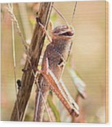 Grasshopper In The Marsh Wood Print