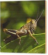 Grasshopper Macro Wood Print