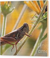 Grasshopper On Coneflower Stem Wood Print