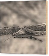 Grasshopper Or Somebody Else Wood Print