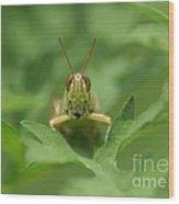 Grasshopper Portrait Wood Print