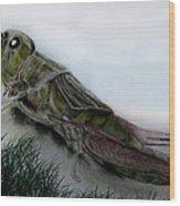 Grasshopper Resting Wood Print