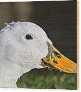 Grassy-bill Duck Wood Print