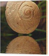 Gravity Shell Wood Print