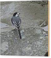 Gray Bird Wood Print