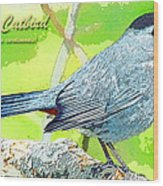 Gray Catbird Digital Art Wood Print