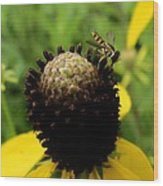 Gray Cone Flower Wood Print