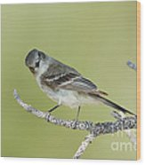 Gray Flycatcher Wood Print