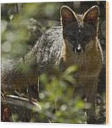 Gray Fox In The Woods Wood Print