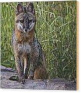 Gray Fox Posing Wood Print