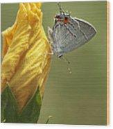Gray Hairstreak Butterfly Wood Print