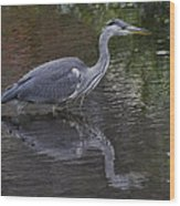 Gray Heron And Reflection Wood Print