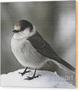 Gray Jay 1 Wood Print