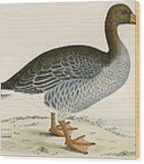 Gray Lag Goose Wood Print
