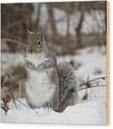 Gray Squirrel In Snow Wood Print