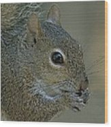 Gray Squirrel Wood Print