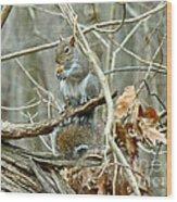 Gray Squirrel - Sciurus Carolinensis Wood Print