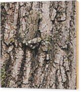 Gray Tree Frog Wood Print