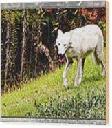 Gray Wolf 2 Wood Print